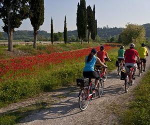 Radfahrer radeln am Mohnfeld vorbei