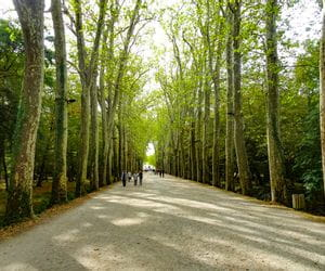Avenue in Chenonceaux on the Loire