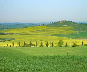 Typische toskanische Landschaft mit gelber Blumenwiese