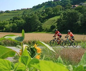 Cyclists in styrian landscape