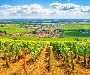 Wonderful views to wine rebs in Burgundy
