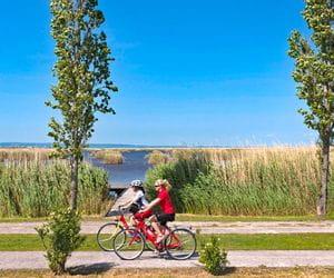 Cyclists on the bank of Lake Neusiedl