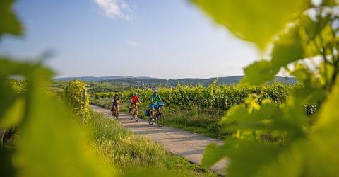 Radfahren entlang der Deutschen Weinstrasse in der Pfalz