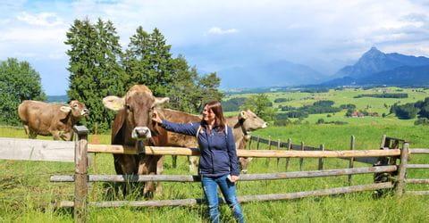 Radpause bei den Kühen