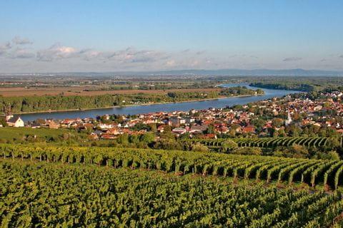 Rheinradweg bei Nierstein