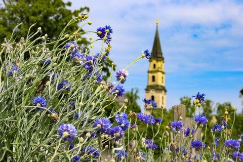 Blumen mit Kirche im Hintergrund