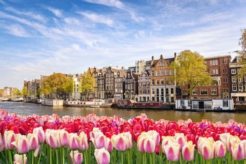 View of Amsterdam with tulips