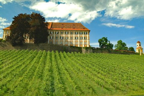 Castle Stainz and vineyard