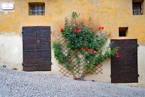 Wall with wooden doors and roses