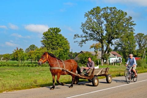 Horse-drawn carriage on cycle path