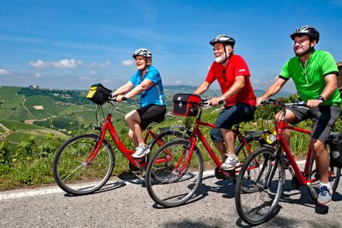 Cyclists in the wine region