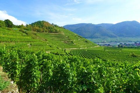 Panoramablick über die Weinberge in der Wachau