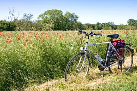 Poppy seed field with bike