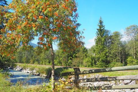 Orangenbaum am Tauernradweg