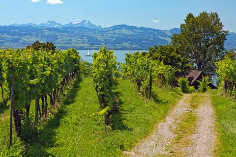 Cycle path in the vineyards near Lindau at Lake Constance