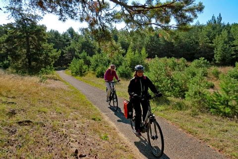 Cyclist on cycle-path through a forest