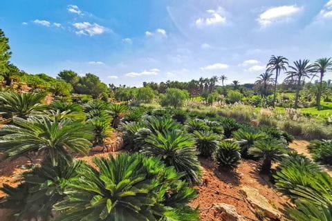 Botanicactus in Ses Salines