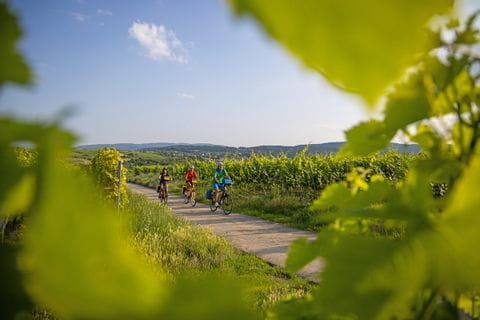 Cycling along the german wine road in the Palatinate