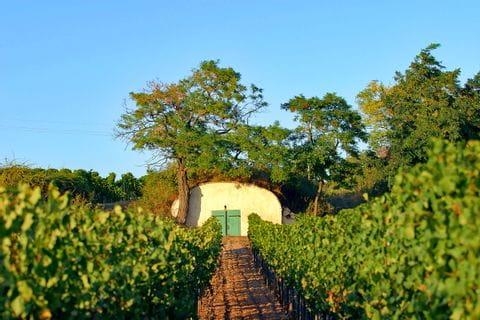 Wine cellar in a vineyard
