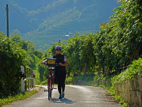 Cyclist in the prosecco vineyards