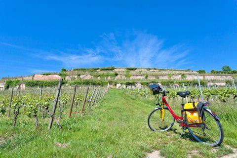 Eurobike Rad zwischen den Weinreben in der Pfalz