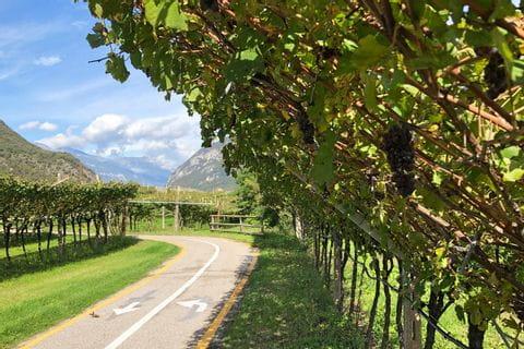 Radweg durch die Weingärten Südtirols