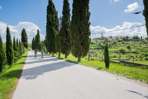 Avenue with cypresses