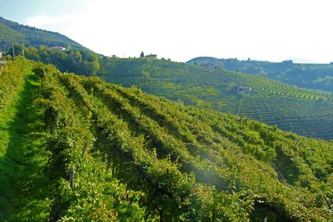 View over the wineyards