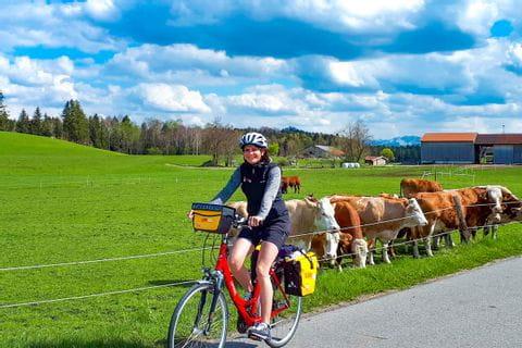 Radweg entlang einer Kuhweide