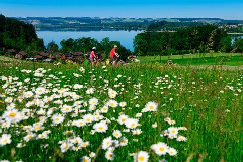 Blumen mit Radfahrer im Hintergrund
