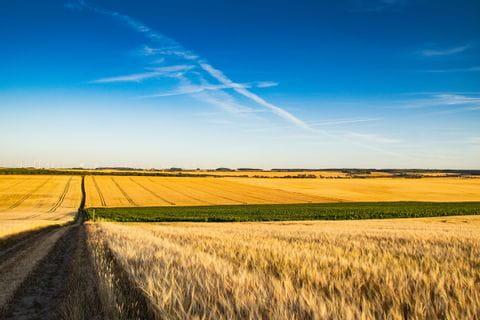 Thüringer Becken Weizenfelder