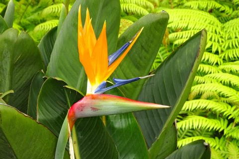 Yellow flower called bird of paradise flower
