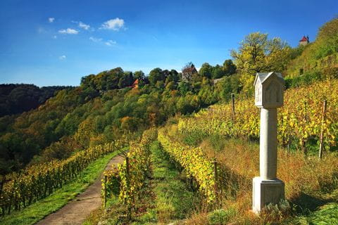 Wine yards in Taubertal Valley