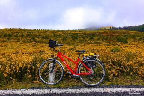 Rad mit gelbem Feld im Hintergrund