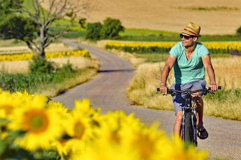 Radfahrer fährt an Sonnenblumenfeld vorbei