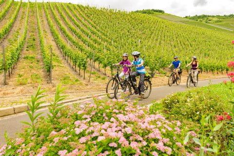 Familie fährt entlang von Weinreben am Moselradweg