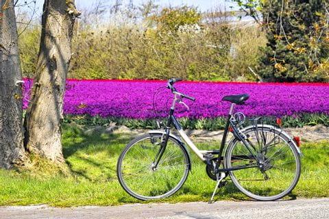 Fahrrad vor einem Blumenfeld
