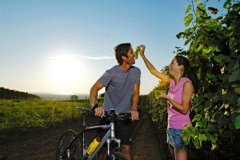 Frau füttert Mann mit Weintrauben in einem Weingarten