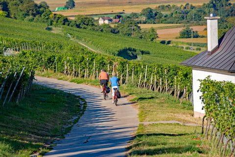 Cyclists on the cycle path near Mühlheim