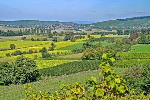 Das fruchtbare Markgräflerland bei Freiburg von oben