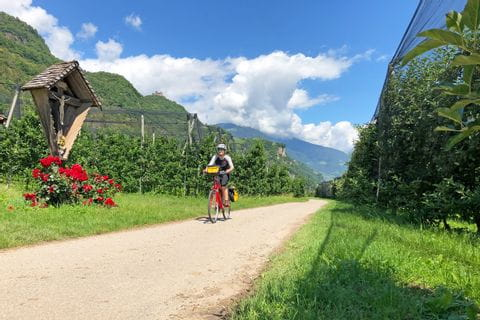 Cyclists in South Tyrol