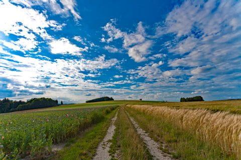 Weg durch ein Kornfeld