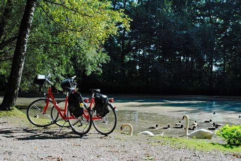 Bikes at a pond
