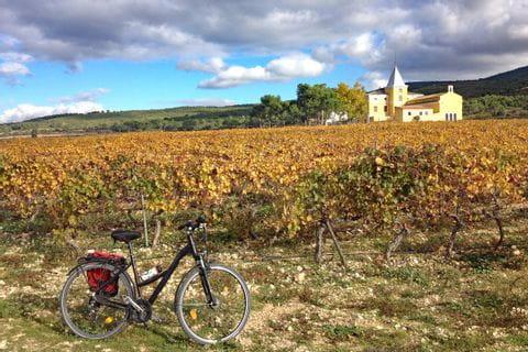 Bike in front of vineyard