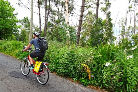 Cyclist in front of opulent vegetation