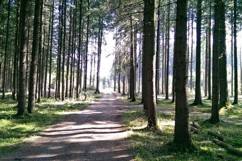 Radweg im Wald nahe des Chiemsees