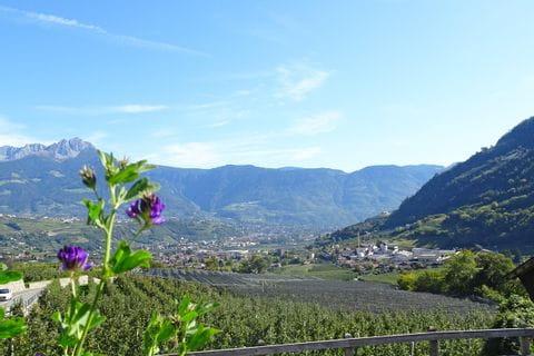 Ausblick auf die Apfelhaine in Südtirol