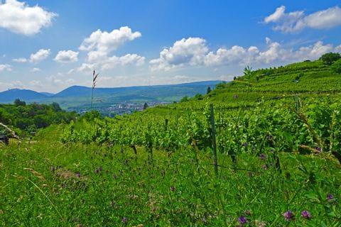 Blick auf die Weiten der Wachauer Weinreben