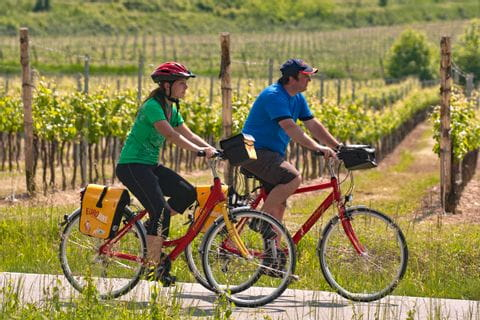 Cyclists in the vineyards