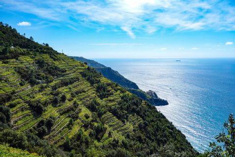 Weinterrassen in Ligurien